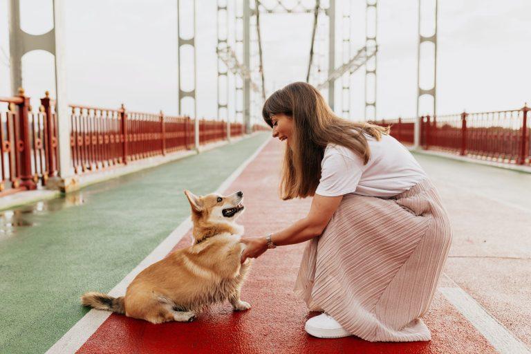 Hunde-Liv Hundetræner København